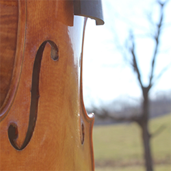 String instrument and tree