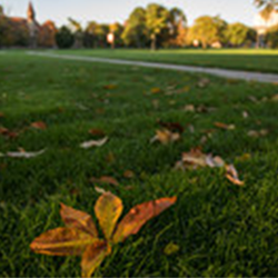 Buckeye leaf on the Oval